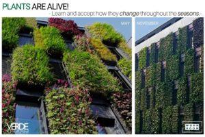 wandverkleidung_pflanze_verdeprofilo_moospanel_mooswand_wandmoos_interior-design_greenwall_wohn-room